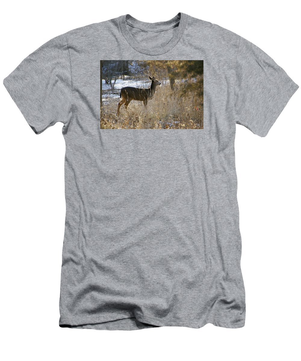 Deer T-Shirt featuring the photograph Deer in Morning light by Toni Berry