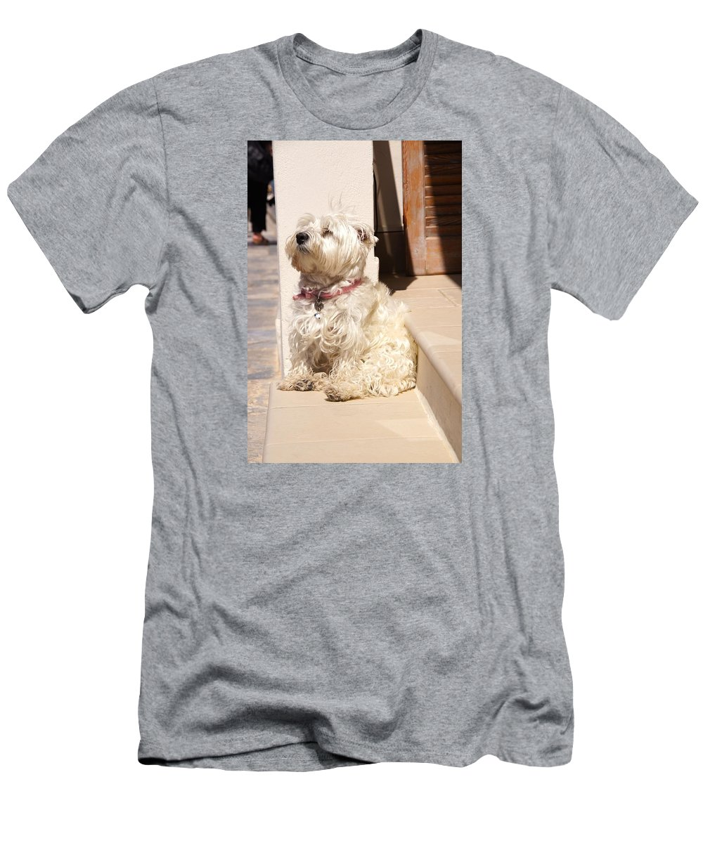 Dog Men's T-Shirt (Athletic Fit) featuring the photograph Dog Begging by Ron Koivisto