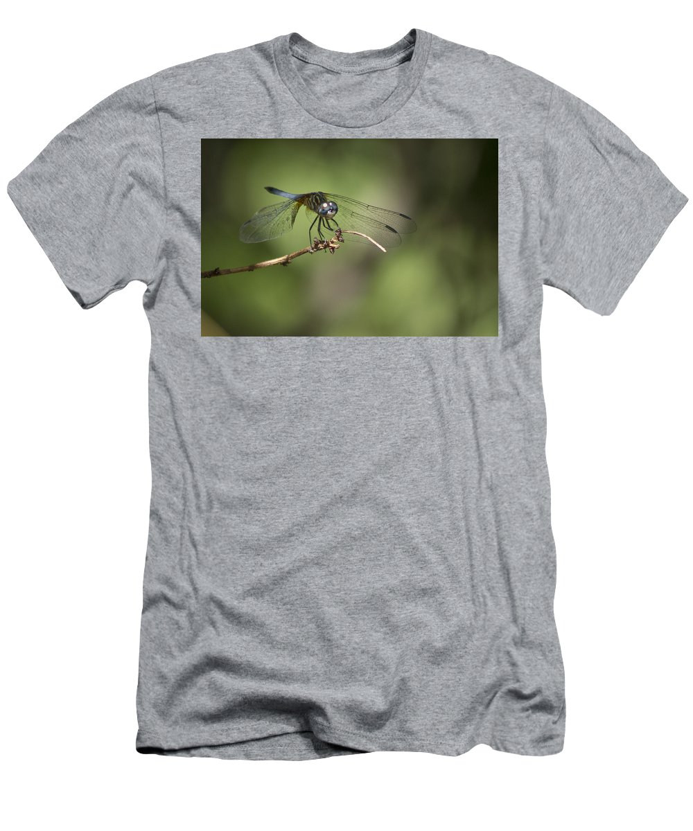 Dragonfly Men's T-Shirt (Athletic Fit) featuring the photograph Dragonfly by Christina Alcantara