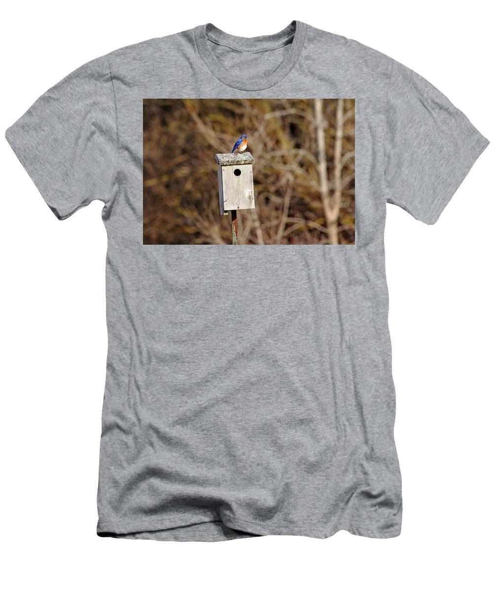 Eastern Bluebird Men's T-Shirt (Athletic Fit) featuring the photograph Eastern Bluebird by Debbie Oppermann