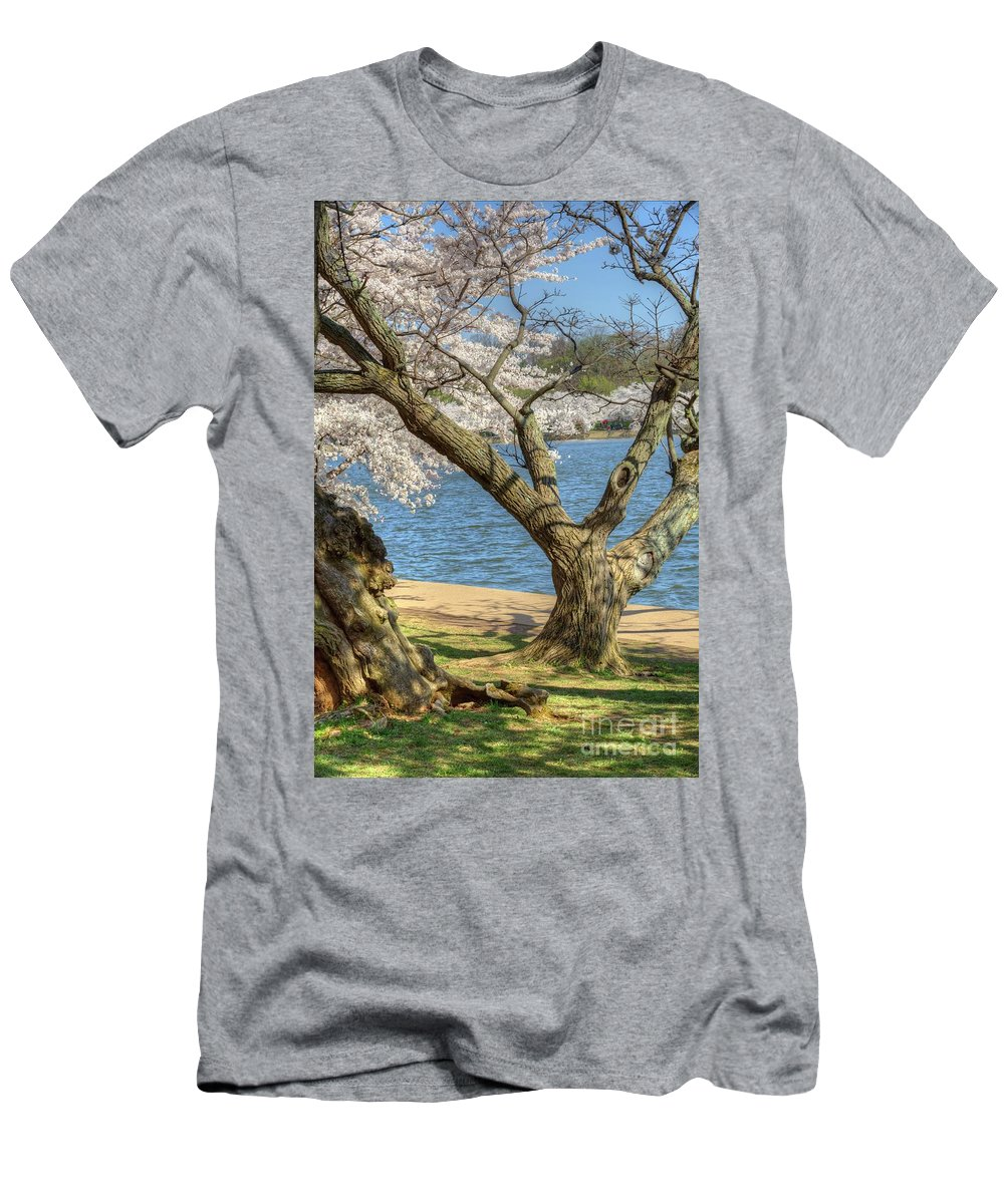 Washington Dc Men's T-Shirt (Athletic Fit) featuring the photograph Elder Cherry Tree by Karen Jorstad