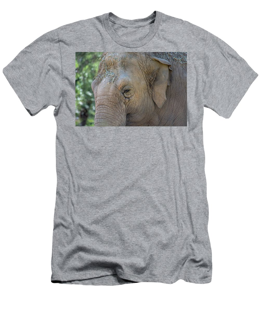 Elephant Men's T-Shirt (Athletic Fit) featuring the photograph Elephant by Jay Billings