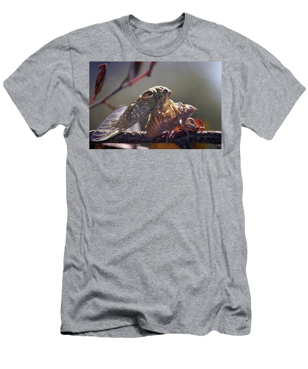Cicada Men's T-Shirt (Athletic Fit) featuring the photograph Emerging - Cicada 1 by D'Arcy Evans