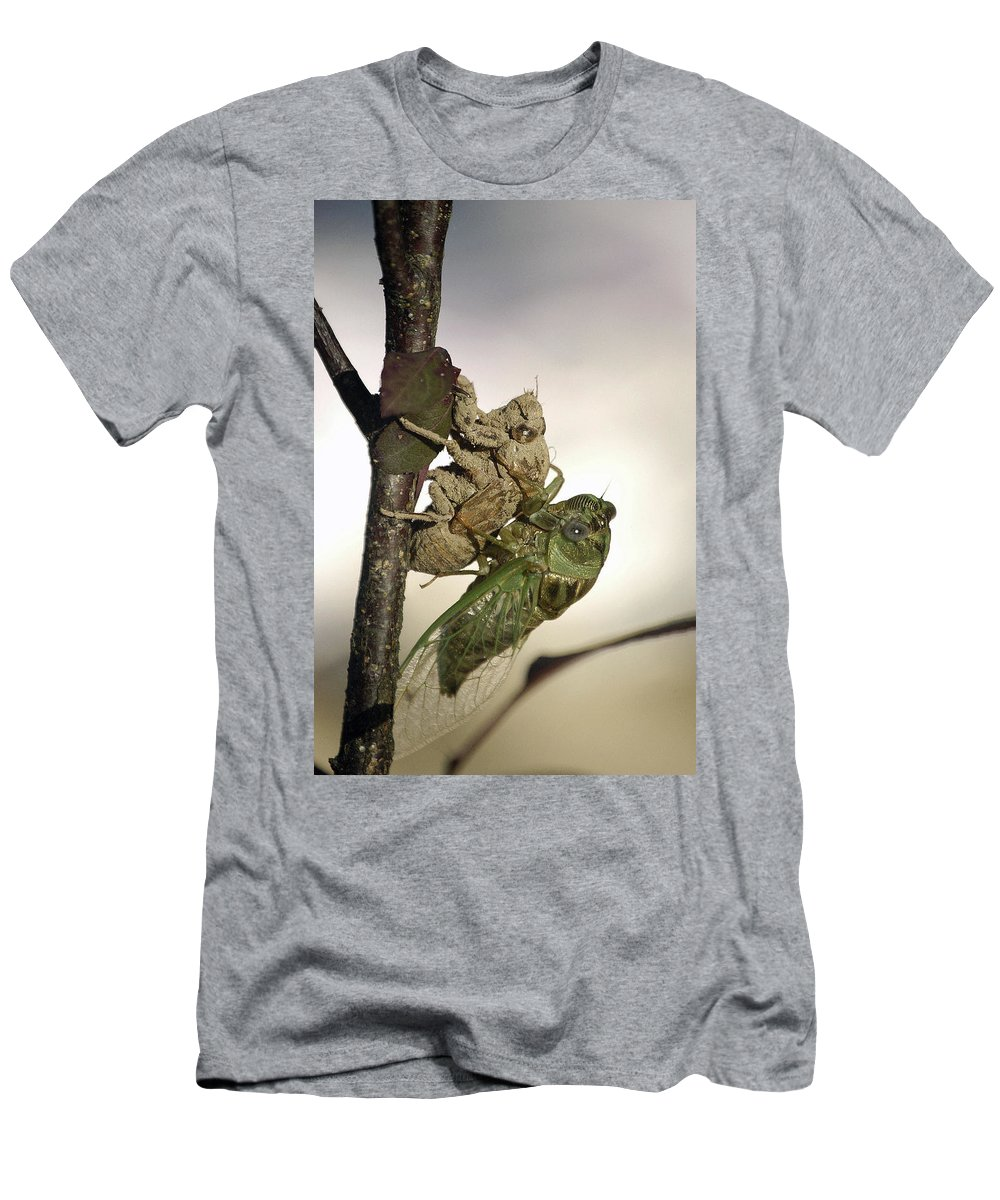 Nature Men's T-Shirt (Athletic Fit) featuring the photograph Emerging - Cicada 2 by D'Arcy Evans