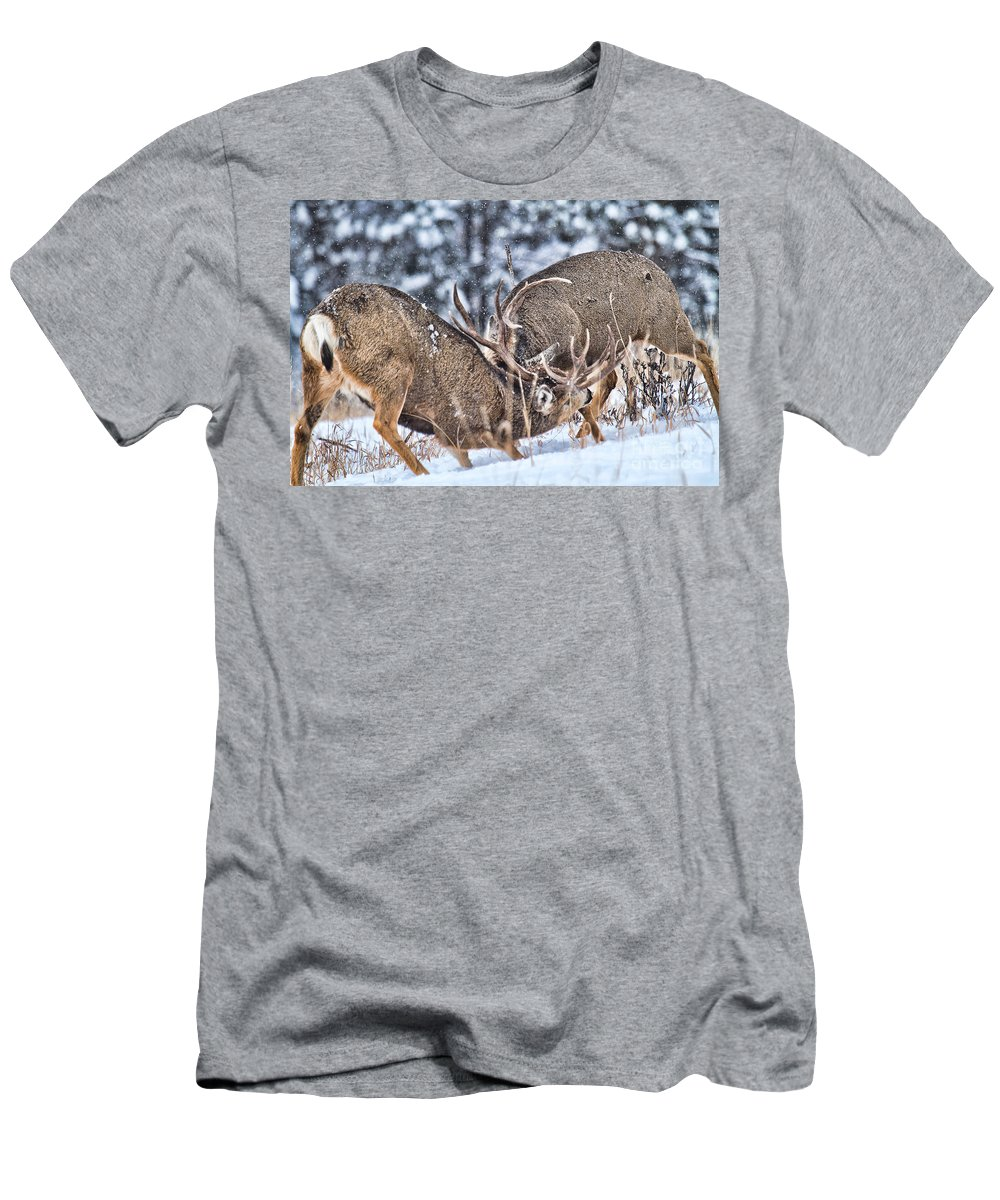 Mule Deer Men's T-Shirt (Athletic Fit) featuring the photograph Fight Club by Jim Garrison
