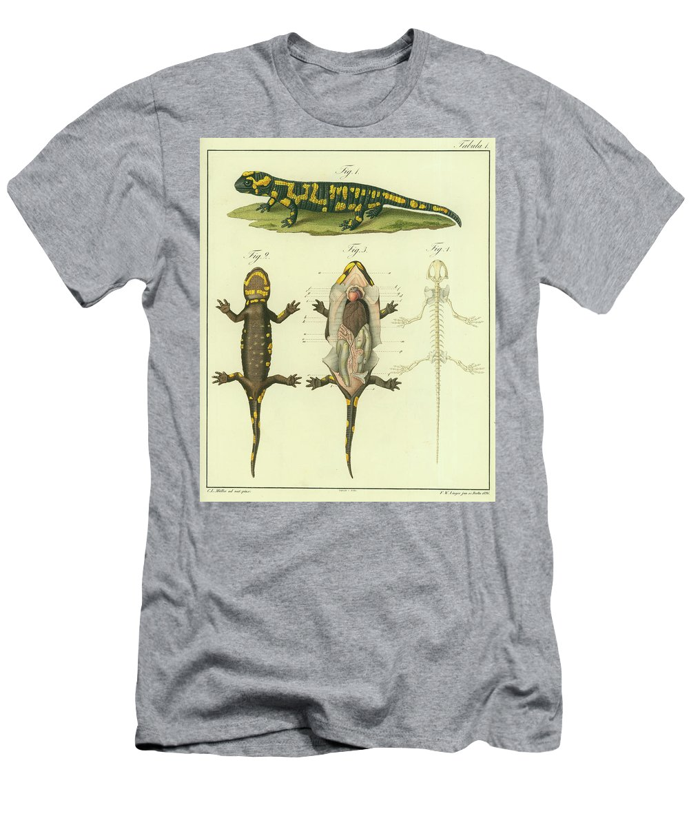 Fire Salamander Anatomy T Shirt For Sale By Christian Leopold Mueller