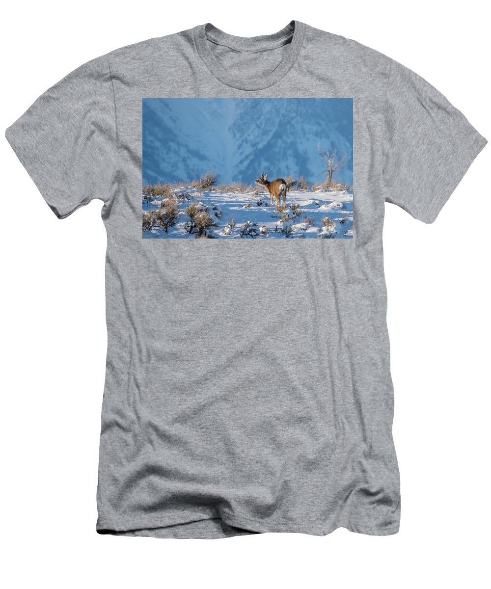 Mule Deer Buck Men's T-Shirt (Athletic Fit) featuring the photograph First Rut Mule Deer Buck by Yeates Photography