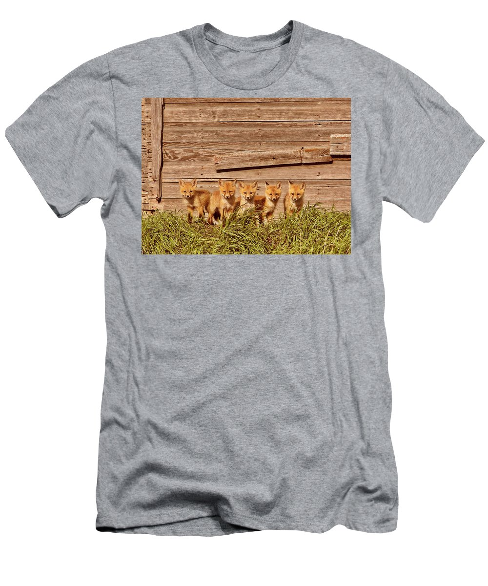 Red Fox Men's T-Shirt (Athletic Fit) featuring the digital art Five Fox Kits By Old Saskatchewan Granary by Mark Duffy