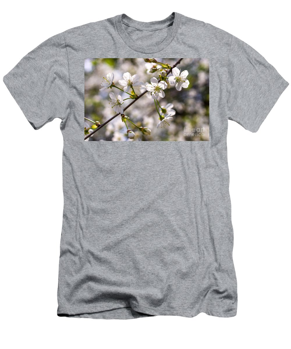 Cherry Men's T-Shirt (Athletic Fit) featuring the photograph Flowering Cherry Tree Branch 4 by Valdis Veinbergs