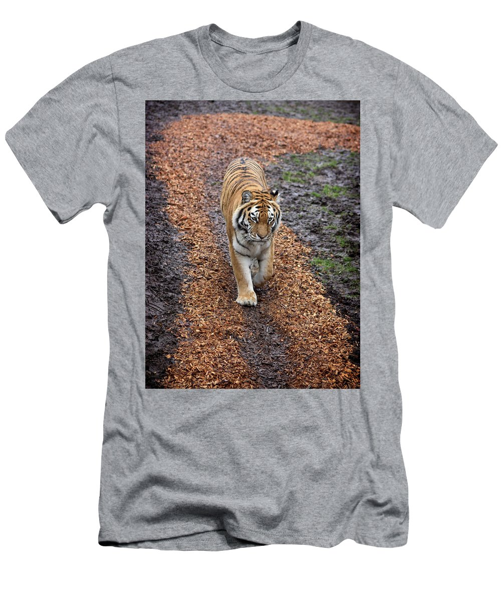 Tiger Men's T-Shirt (Athletic Fit) featuring the photograph Follow Your Path In Life by Martin Newman