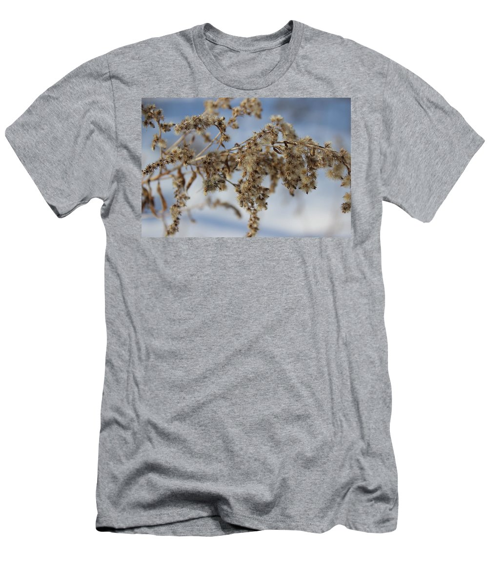 Plant Men's T-Shirt (Athletic Fit) featuring the photograph Goldenrod In The Snow by Cliff Ball