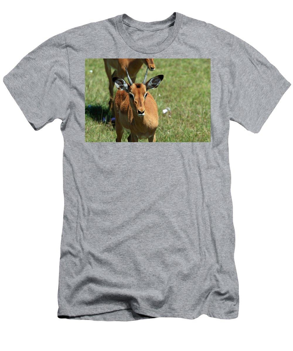 Deer Men's T-Shirt (Athletic Fit) featuring the photograph Grassland Deer by Aidan Moran