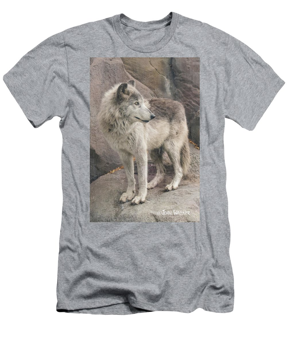 Gray Wolf Men's T-Shirt (Athletic Fit) featuring the photograph Gray Wolf Profile by Joan Wallner