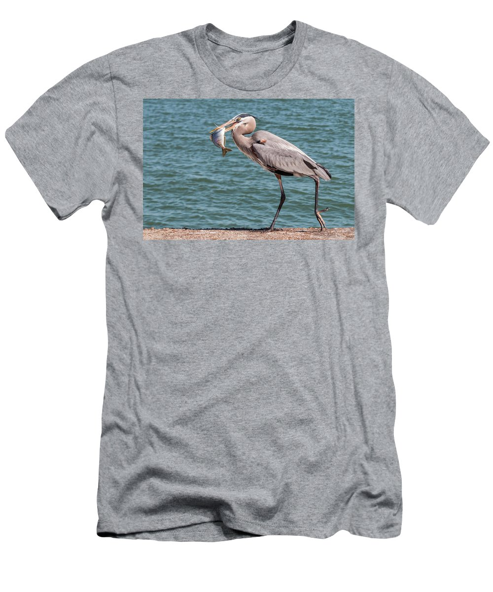 Bird Men's T-Shirt (Athletic Fit) featuring the photograph Great Blue Heron Walking With Fish #2 by Patti Deters
