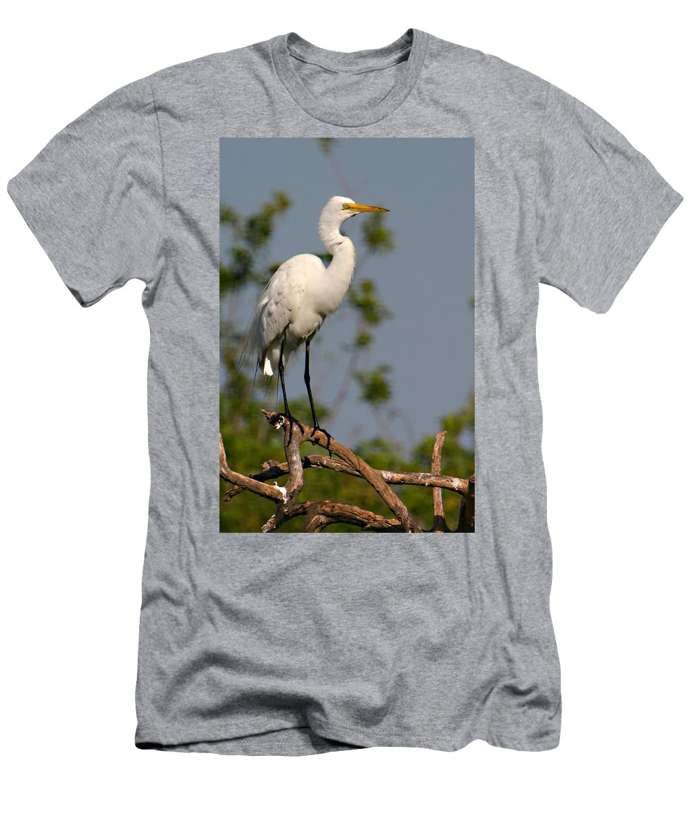 Great White Egret Bird Feathers Flying Florida Sanctuary Wildlife Photograph Photography Men's T-Shirt (Athletic Fit) featuring the photograph Great White Egret Pose by Shari Jardina