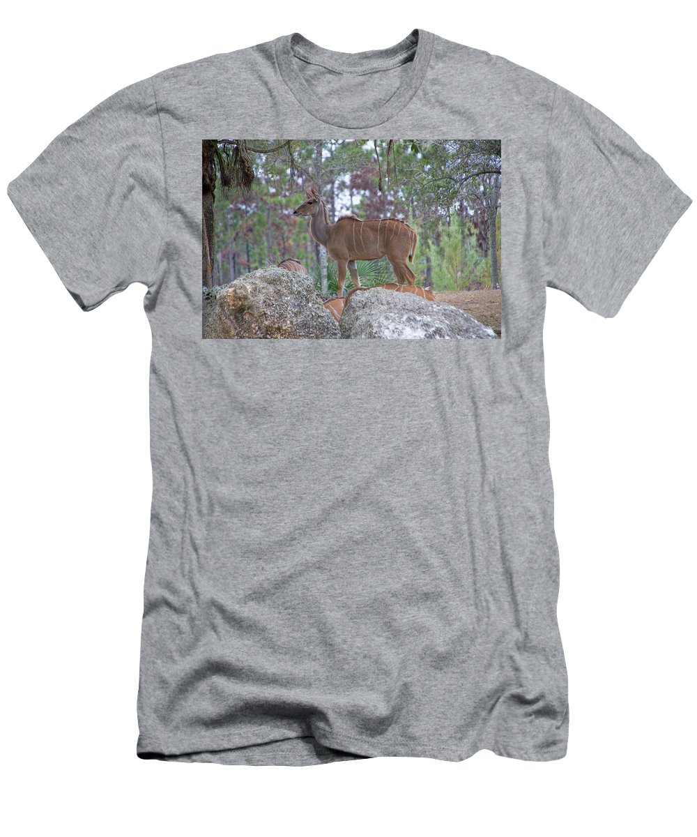 Wildlife Men's T-Shirt (Athletic Fit) featuring the photograph Greater Kudu Female - Rdw002756 by Dean Wittle