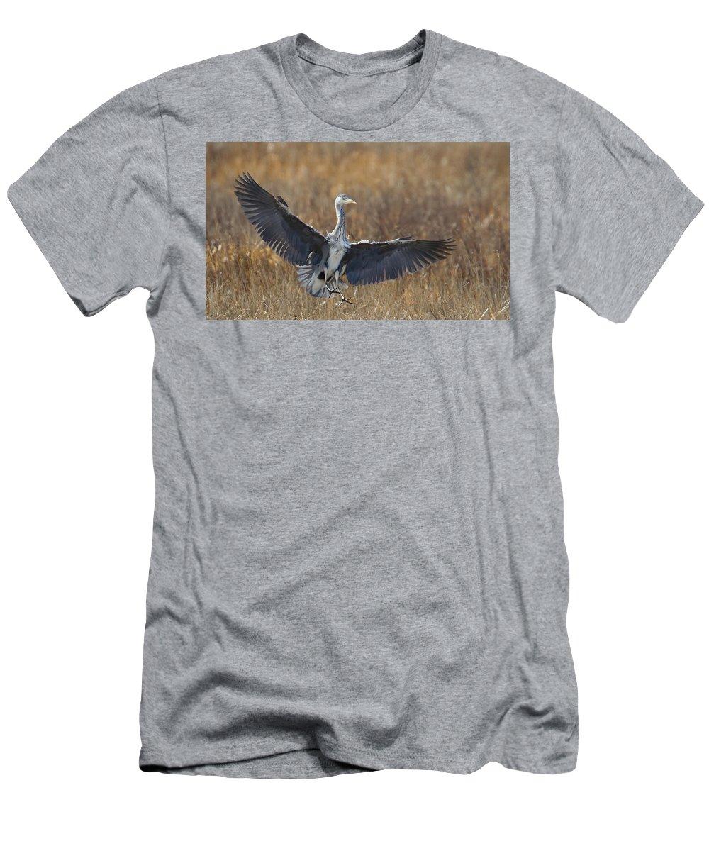 Heron Men's T-Shirt (Athletic Fit) featuring the photograph Grey Heron Landing by Bob Kemp