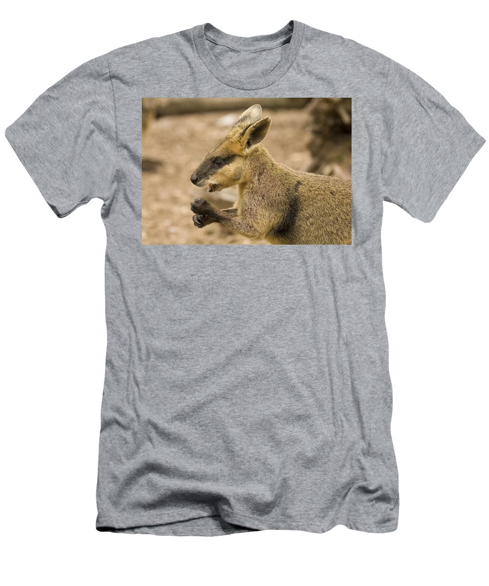 Wallaby Men's T-Shirt (Athletic Fit) featuring the photograph Having A Snack by Mike Dawson