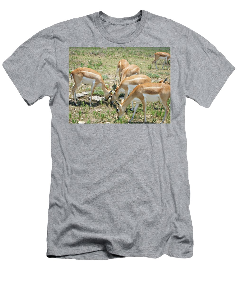 Antelope Men's T-Shirt (Athletic Fit) featuring the photograph Headbutt by Douglas Barnard