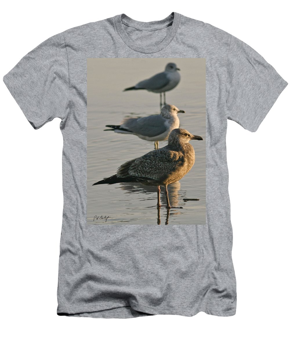 Birds Men's T-Shirt (Athletic Fit) featuring the photograph Herring Gull by Phill Doherty