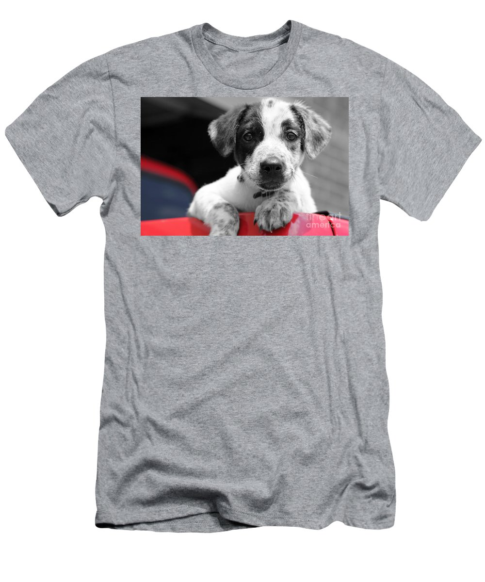 Dogs Men's T-Shirt (Athletic Fit) featuring the photograph Hmmm by Amanda Barcon