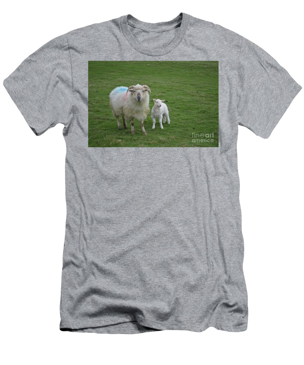 Sheep Men's T-Shirt (Athletic Fit) featuring the photograph Horned Mother Sheep And Baby In Ireland by DejaVu Designs