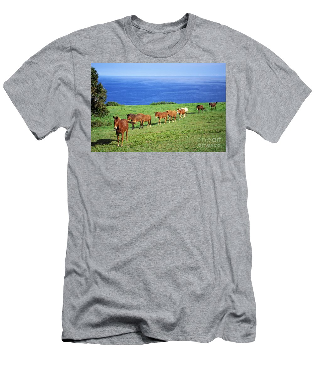 Afternoon Men's T-Shirt (Athletic Fit) featuring the photograph Horses by Bob Abraham - Printscapes