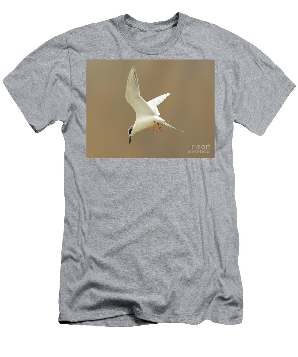 Animal Men's T-Shirt (Athletic Fit) featuring the photograph Hovering Tern by Robert Frederick