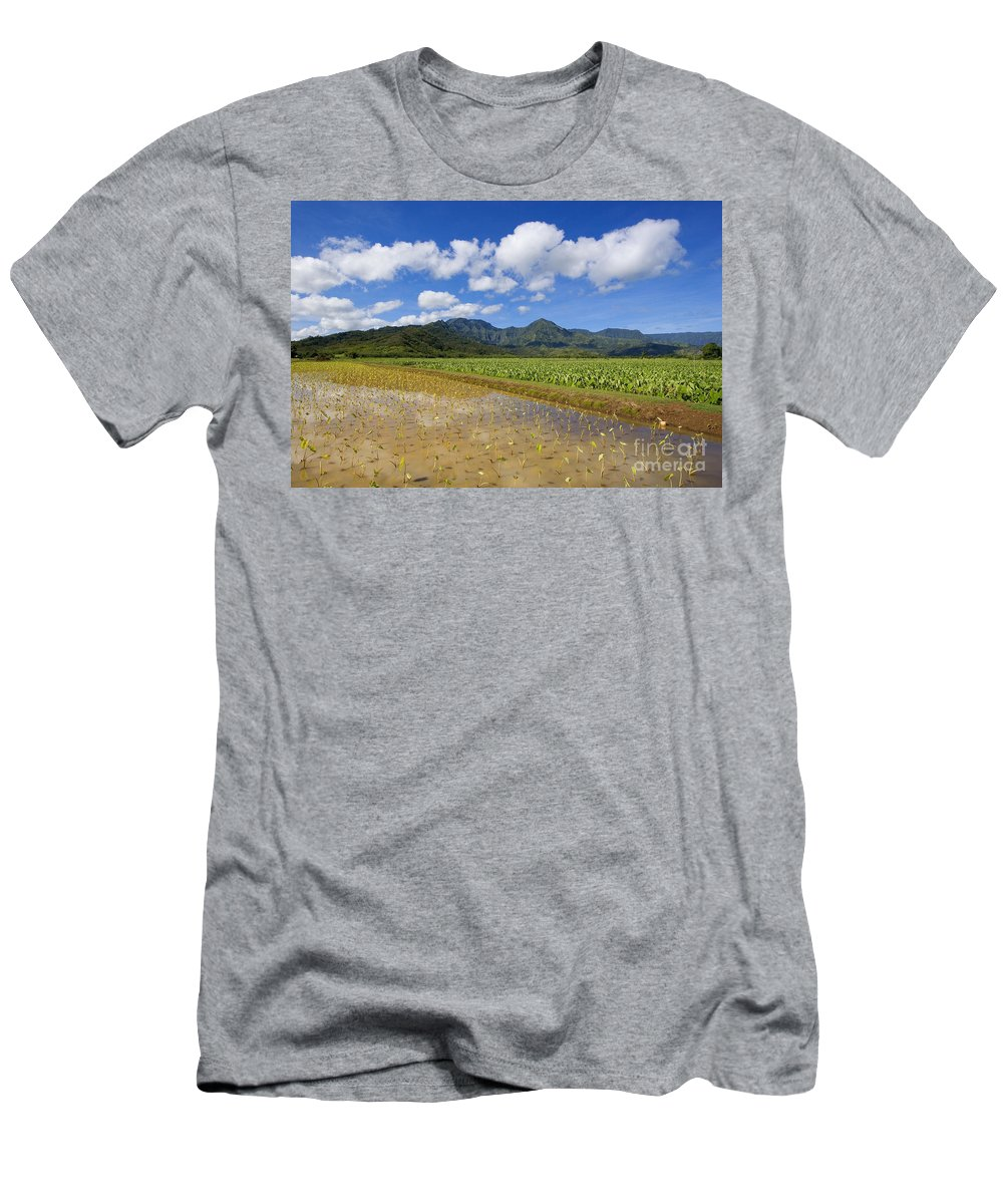 Afternoon Men's T-Shirt (Athletic Fit) featuring the photograph Kauai Wet Taro Farm by Ron Dahlquist - Printscapes