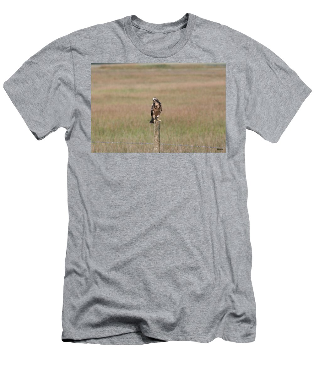 Hawk Wild Bird Nature Grass Fence Barbwire Flying Men's T-Shirt (Athletic Fit) featuring the photograph King Of His Domain. by Andrea Lawrence