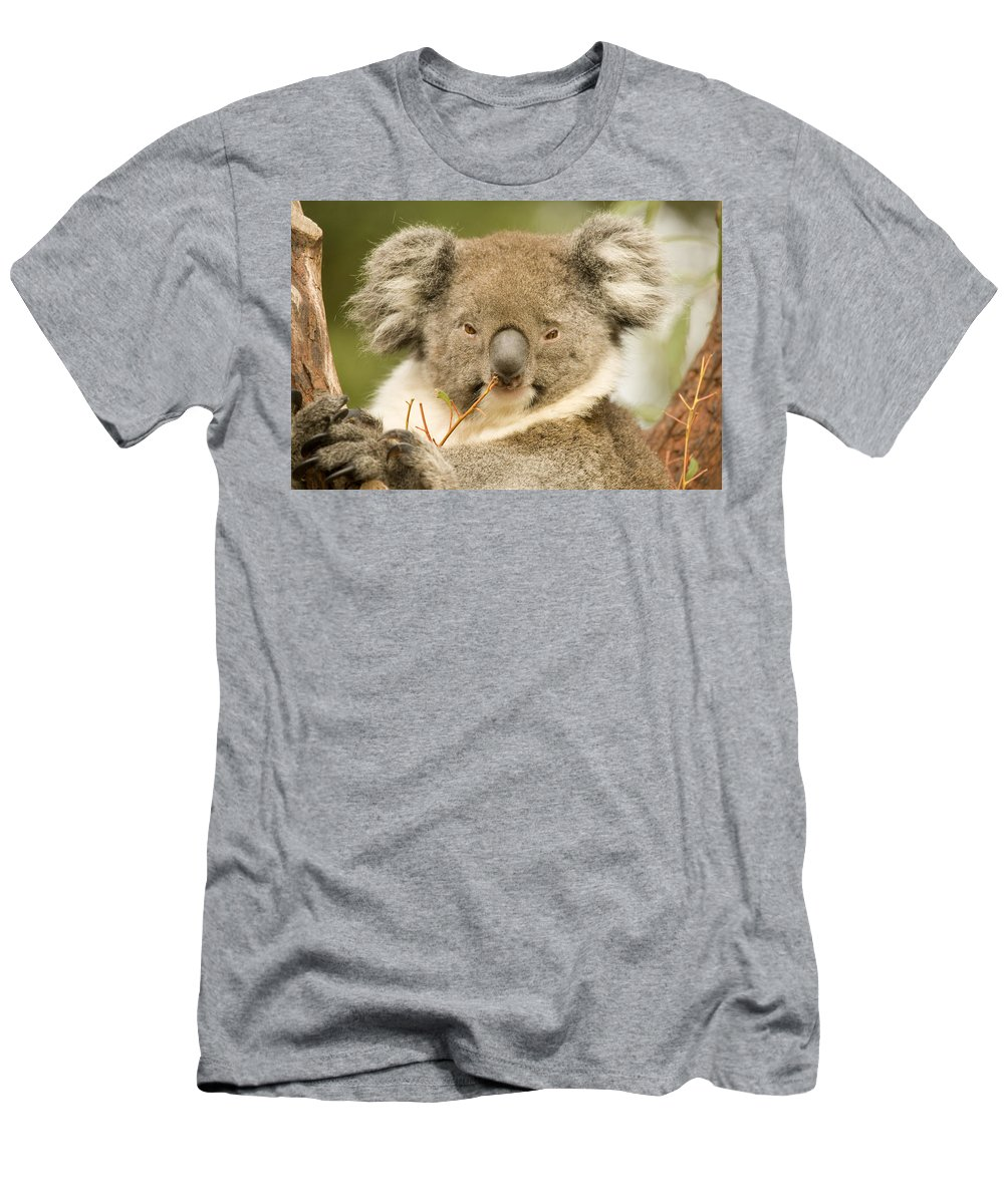 Koala Men's T-Shirt (Athletic Fit) featuring the photograph Koala Snack by Mike Dawson