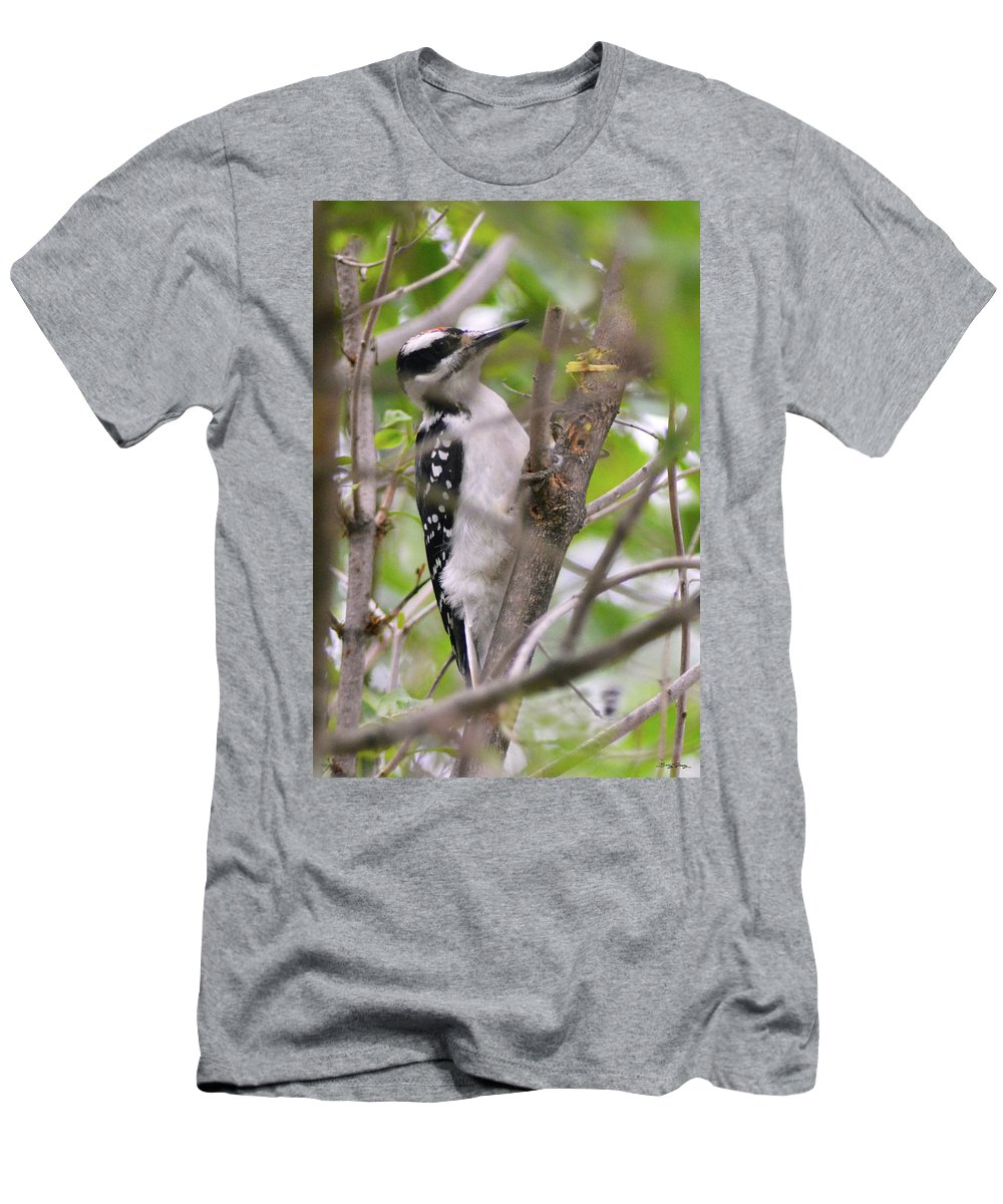 Hairy Woodpecker Men's T-Shirt (Athletic Fit) featuring the pyrography Hairy Woodpecker by Sally Sperry