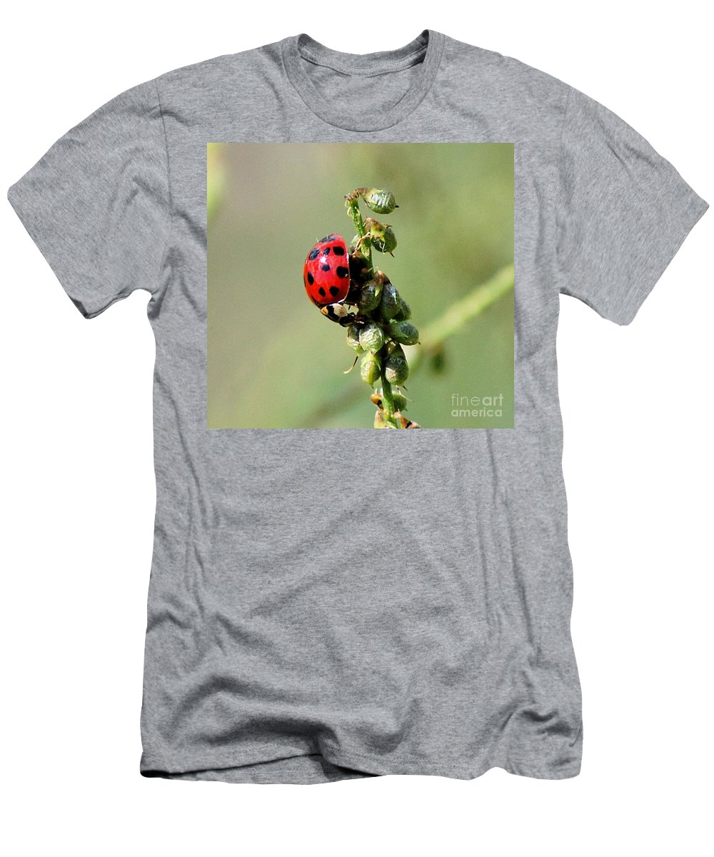 Landscape Men's T-Shirt (Athletic Fit) featuring the photograph Lady Beetle by David Lane