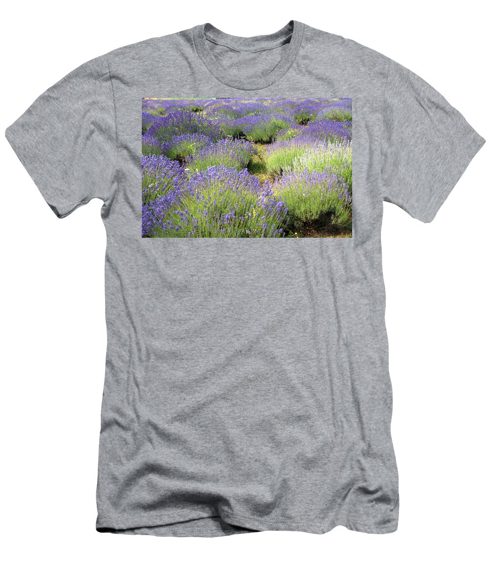 Lavender Men's T-Shirt (Athletic Fit) featuring the photograph Lavender Field, Tihany, Hungary by Attila Jandi