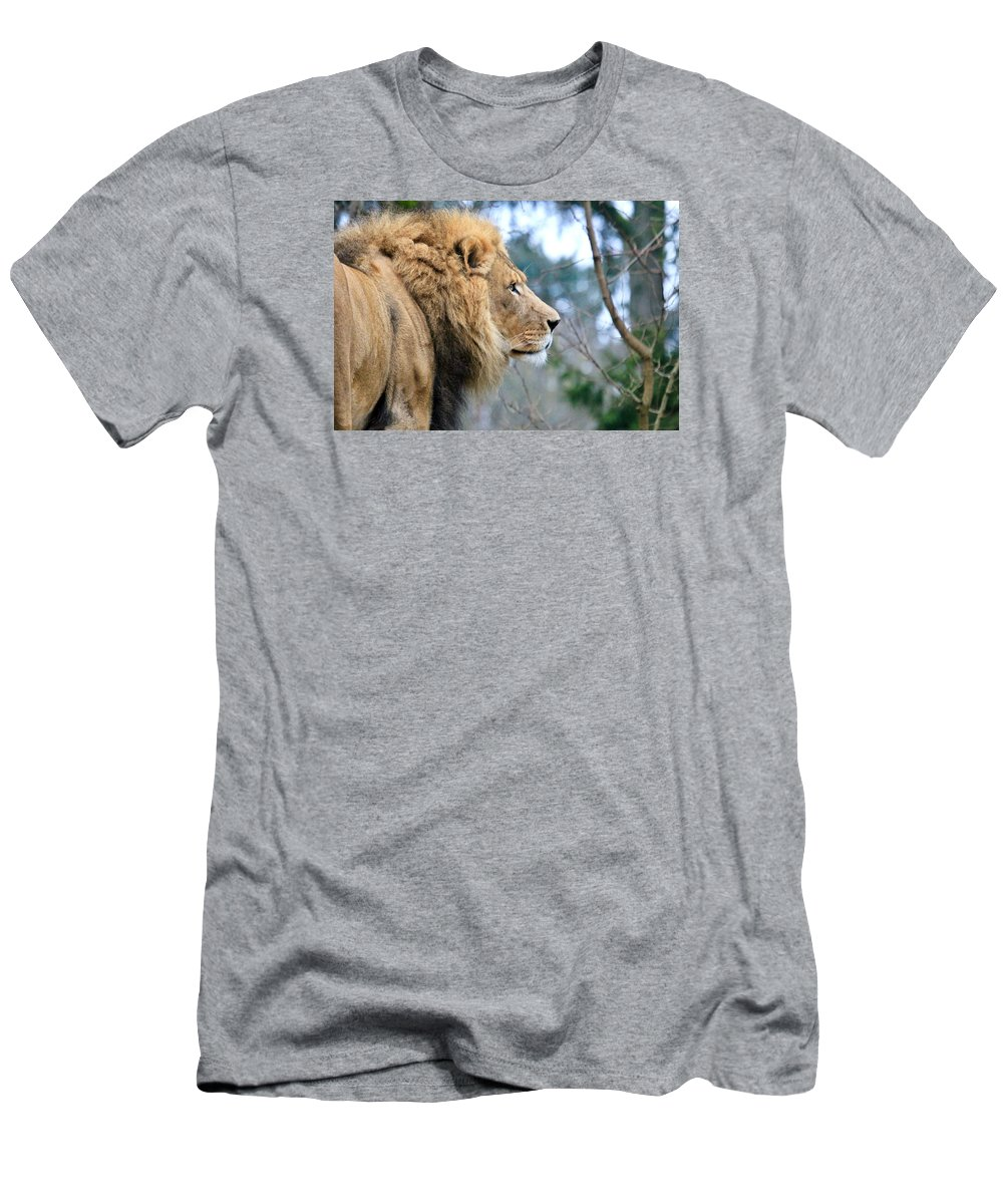 Lion Men's T-Shirt (Athletic Fit) featuring the photograph Lion In Thought by Athena Mckinzie