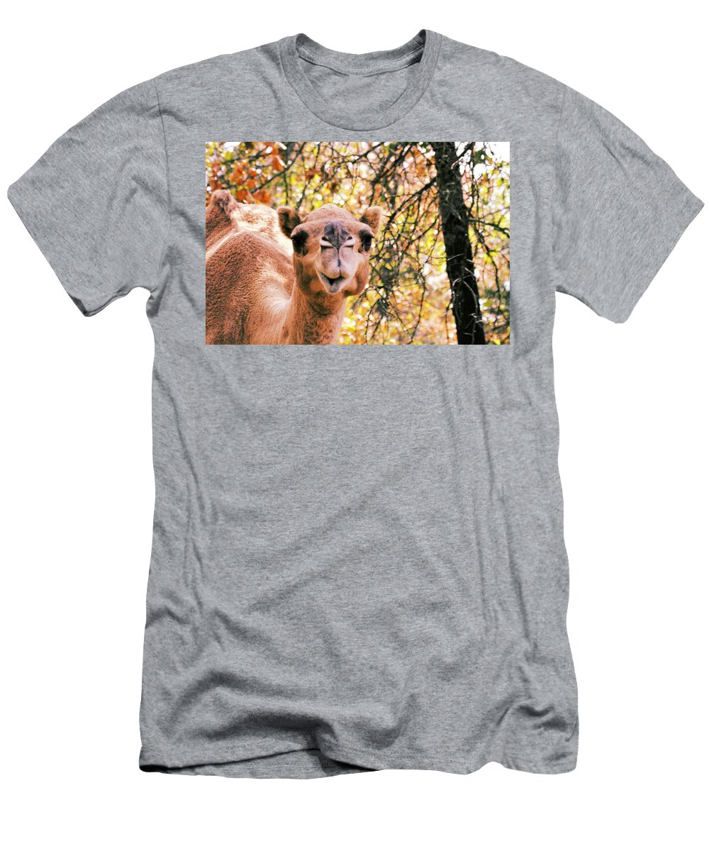 Camel Men's T-Shirt (Athletic Fit) featuring the photograph Look At Me by Douglas Barnard