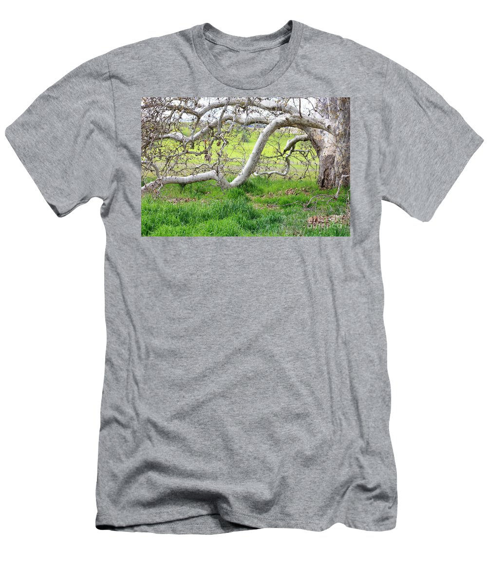 Landscape Men's T-Shirt (Athletic Fit) featuring the photograph Low Branches On Sycamore Tree by Carol Groenen