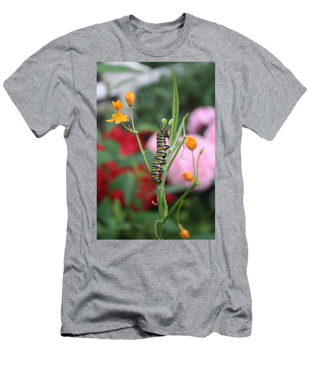 Butterfly Men's T-Shirt (Athletic Fit) featuring the photograph Monarch Butterfly Caterpillar by Devon Kotke