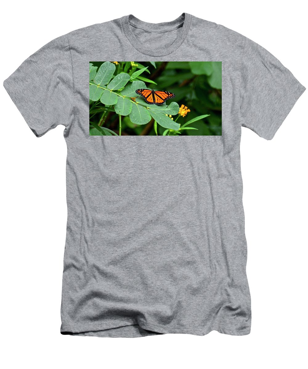 Butterfly Men's T-Shirt (Athletic Fit) featuring the photograph Monarch Butterfly Resting On Cassia Tree Leaf by Carol Bradley