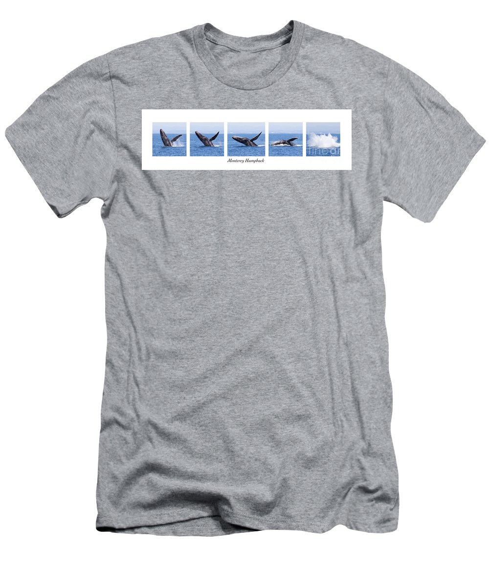 Monterey Bay Men's T-Shirt (Athletic Fit) featuring the photograph Monterey Humpback by Candice Zee