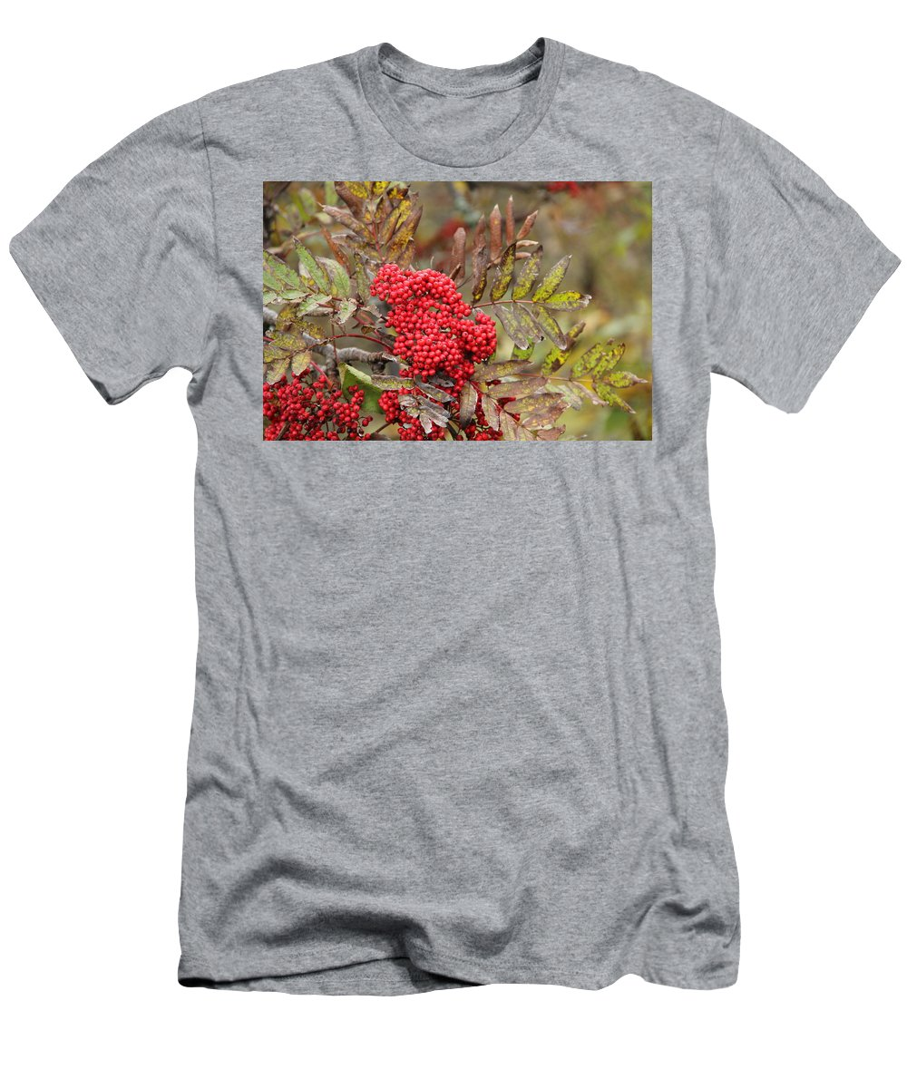Mountain Ash Men's T-Shirt (Athletic Fit) featuring the photograph Mountain Ash With Berries by Allen Nice-Webb