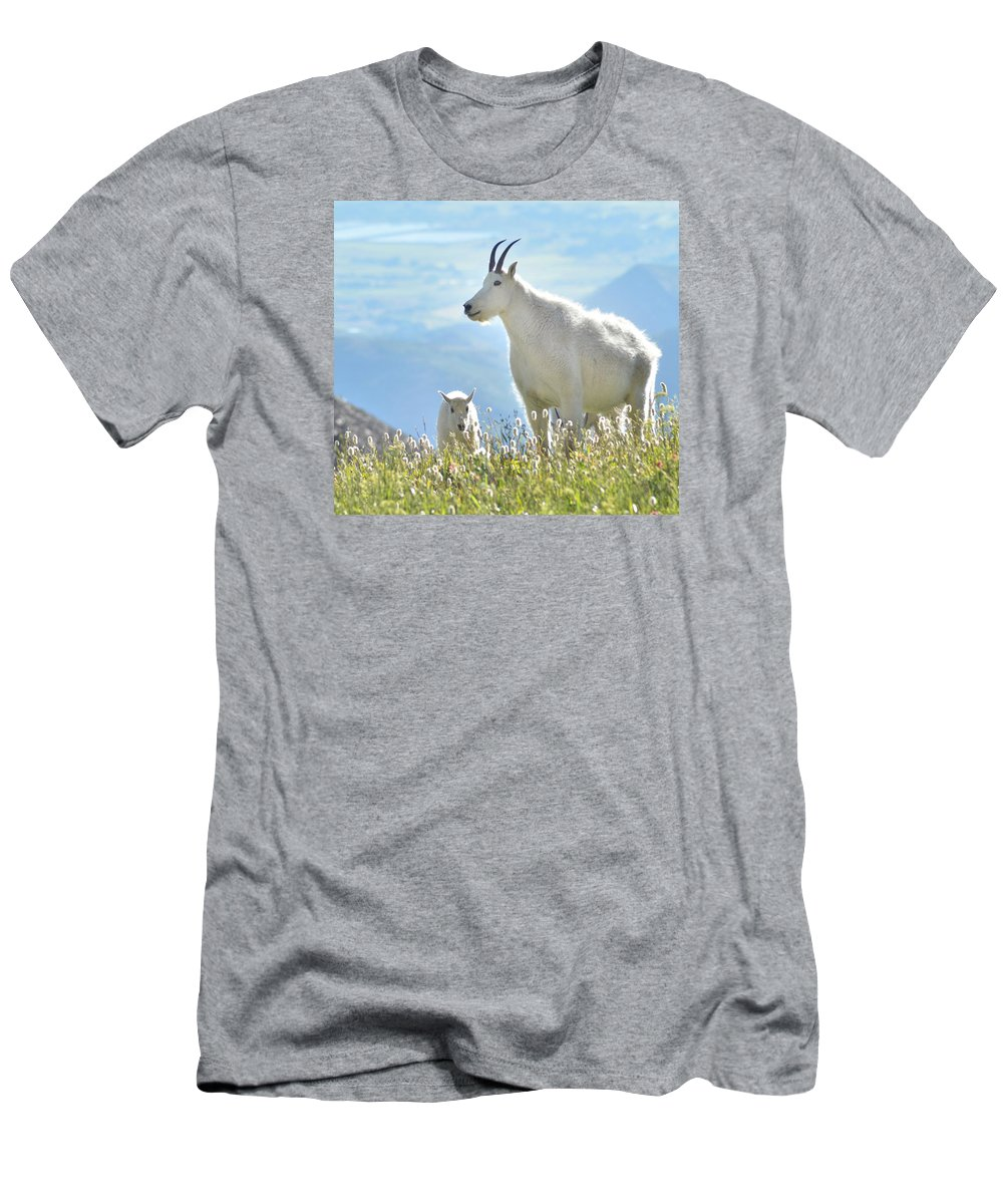 Mountain Goat Men's T-Shirt (Athletic Fit) featuring the photograph Mountain Goat Momma And Kid by Tara Roberts