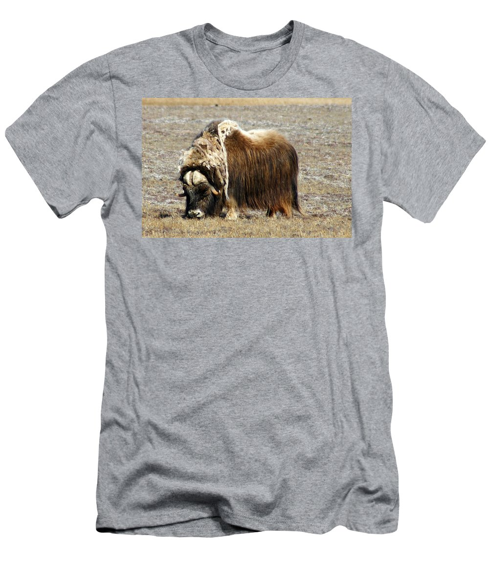 Musk Ox Men's T-Shirt (Athletic Fit) featuring the photograph Musk Ox by Anthony Jones