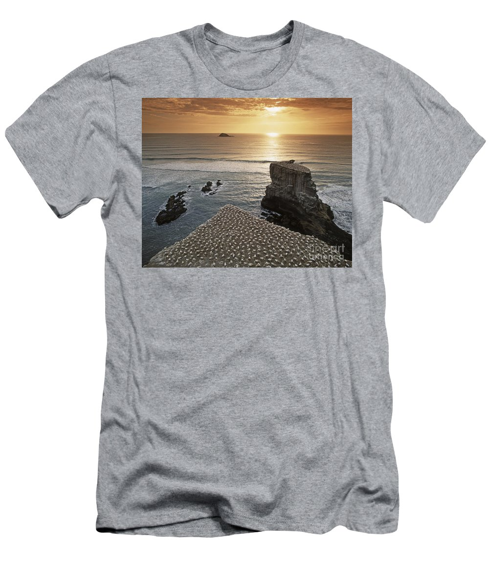 6x7 T-Shirt featuring the photograph new zealand gannet colony at muriwai beach ,gannet fly from Muri by Juergen Held