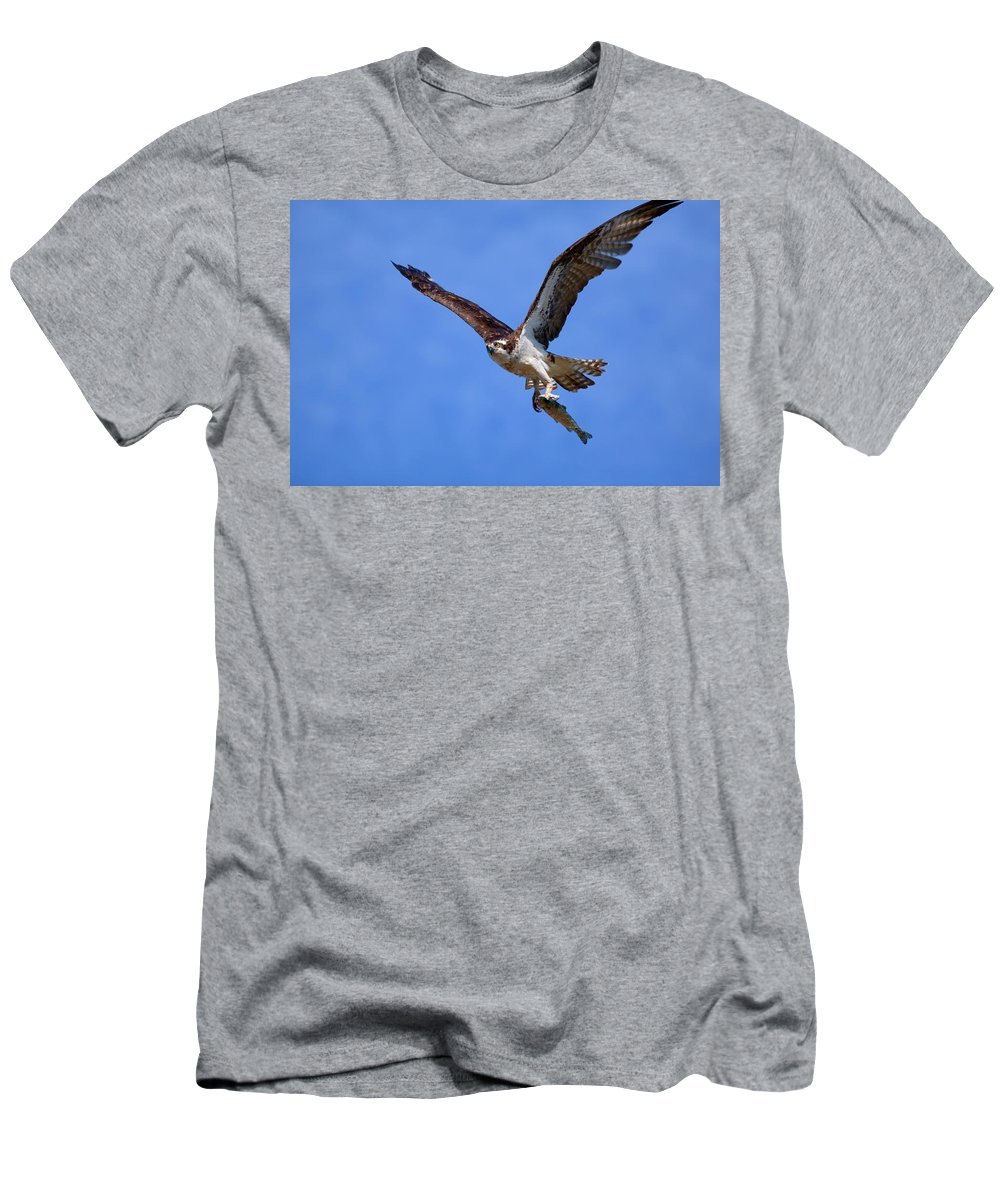 Osprey Men's T-Shirt (Athletic Fit) featuring the photograph Nice Catch by Randall Ingalls