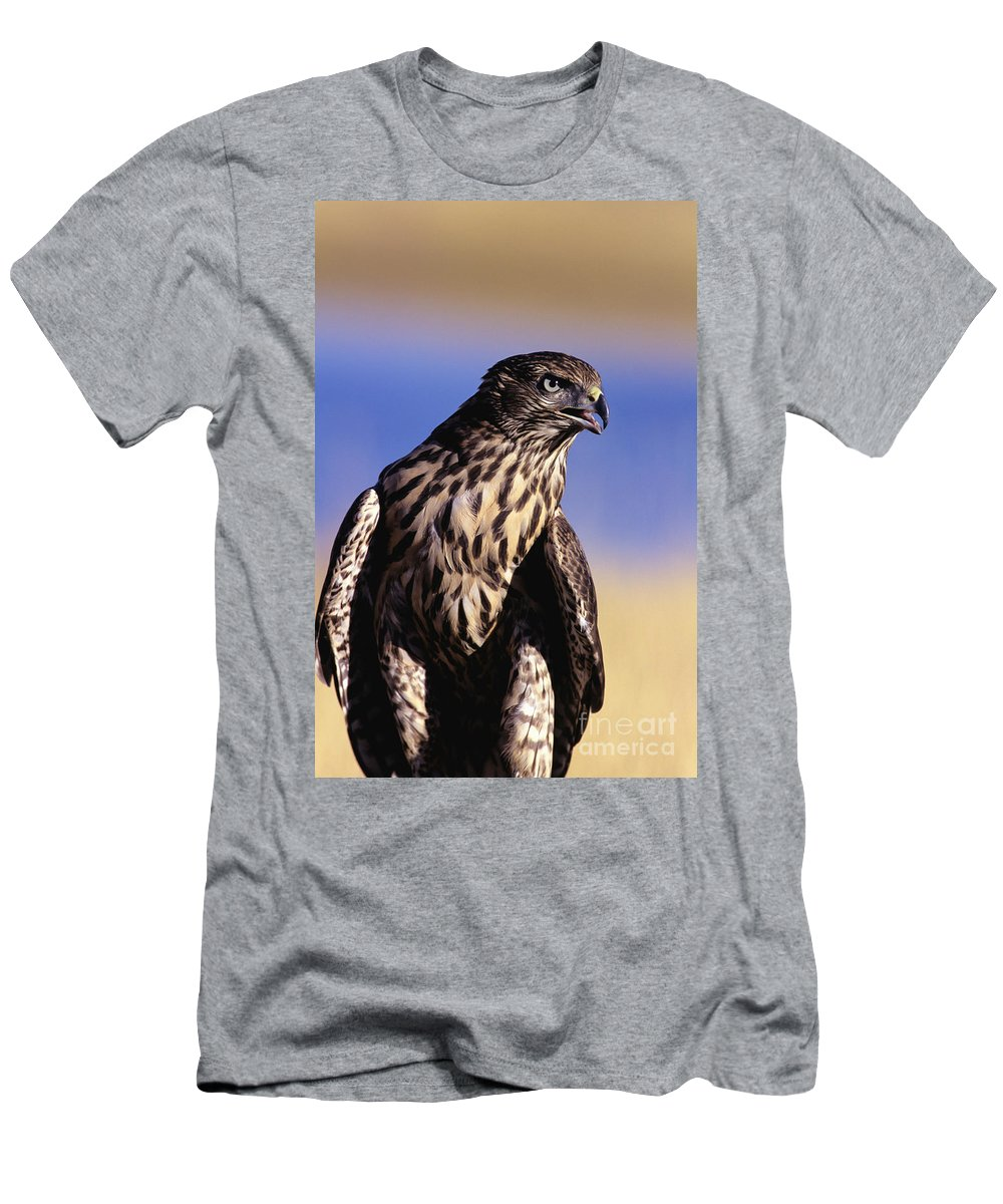 Accipiter Men's T-Shirt (Athletic Fit) featuring the photograph Northern Goshawk by John Hyde - Printscapes