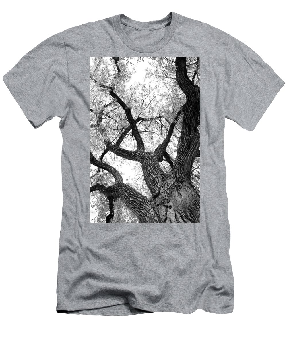 Cottonwood Men's T-Shirt (Athletic Fit) featuring the photograph Old Cottonwood Tree by James BO Insogna
