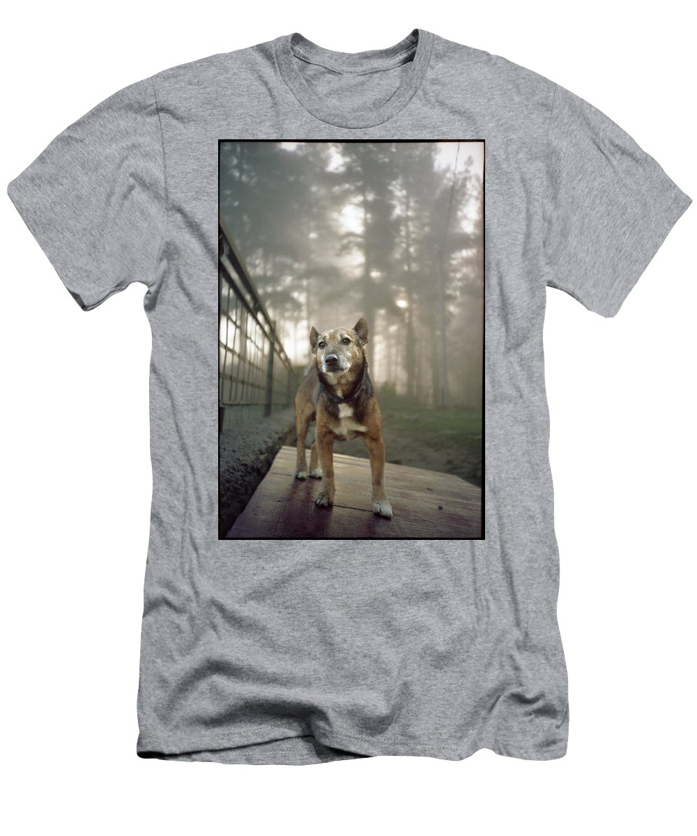 Dog Men's T-Shirt (Athletic Fit) featuring the photograph Old Mac by Rafa Rivas