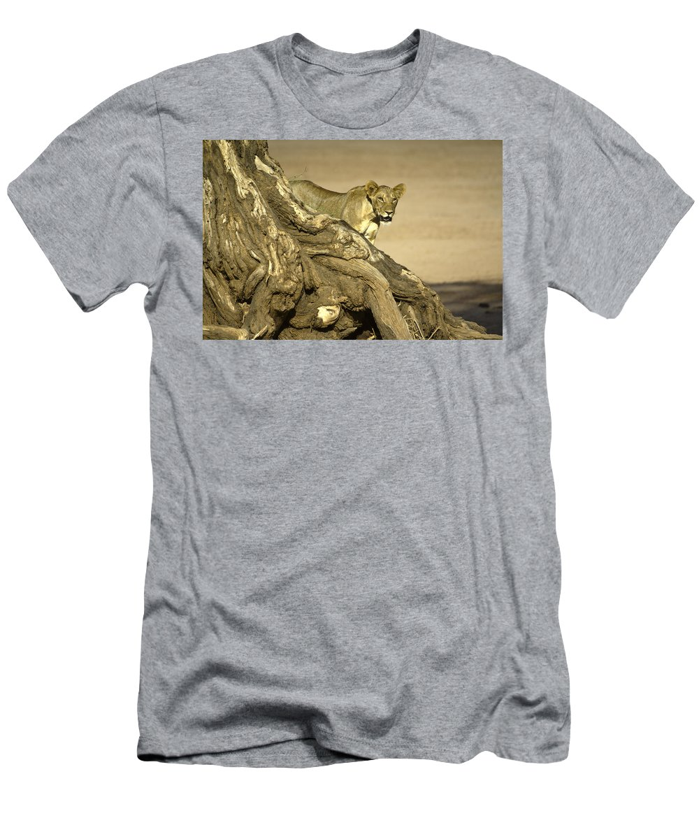 Africa T-Shirt featuring the photograph Peeking Out by Michele Burgess
