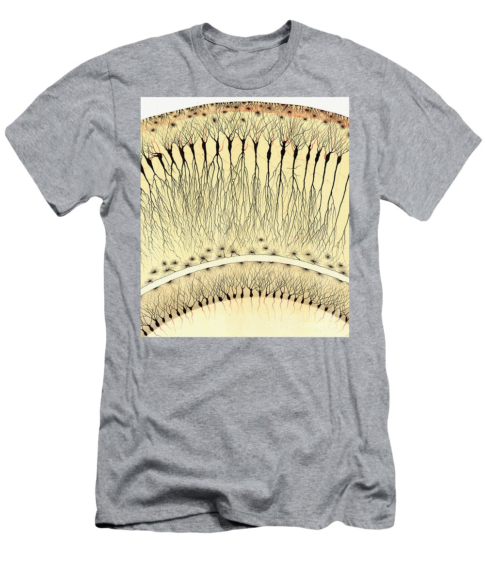 History Men's T-Shirt (Athletic Fit) featuring the photograph Pes Hipocampi Major Santiago Ramon Y Cajal by Science Source